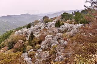 自然,風景,空,花,桜,屋外,山,樹木,草木
