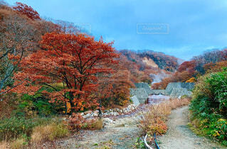自然,風景,空,秋,紅葉,屋外,山,草,樹木,カエデ,パス