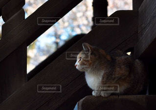 猫,動物,座る,木目