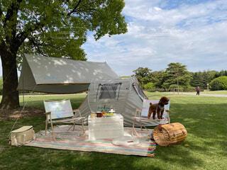 公園でピクニック、犬ちゃんとテント、青空と芝生の写真・画像素材[4350058]