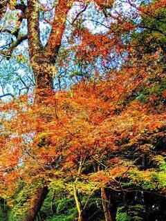 自然,風景,秋,森林,屋外,樹木