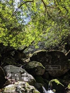 自然,屋外,樹木,岩,草木