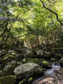 自然,風景,森林,屋外,樹木,岩,草木