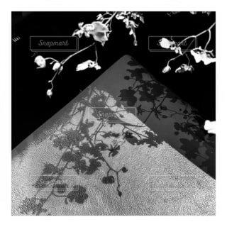 花,影,バー,ムード,草木,テキスト,あの日,回想,黒と白