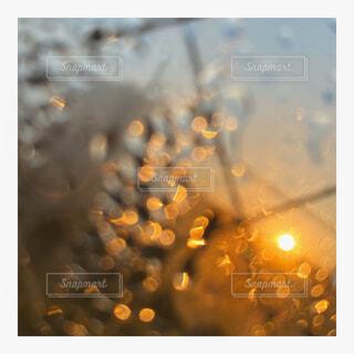 窓,水面,夜明け,朝,朝陽,明るい,結露,ムード,朝露,歌,景観,あの日,夜明けの歌