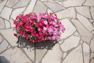 花,ピンク,草木