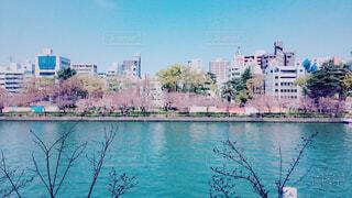 空,建物,桜,屋外,川,水面,樹木,天満橋