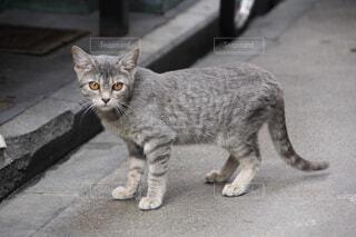 猫,動物,屋外,床,グレー,地面,ネコ科