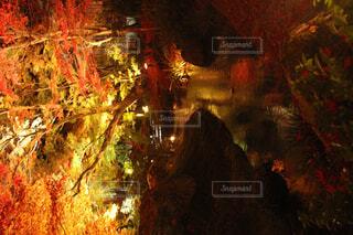自然,秋,紅葉,屋外,樹木,洞窟,クリスマス ツリー