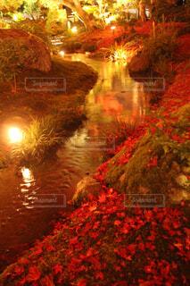 自然,風景,秋,紅葉,屋外,湖,水面,反射,明るい