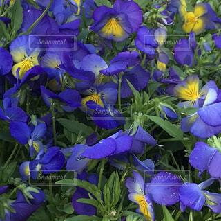 花,春,ブルー,草木