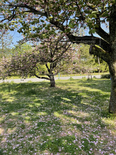 公園,花,春,屋外,草,樹木,草木,ガーデン