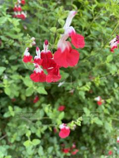 花,屋外,赤,草,樹木,草木,フローラ