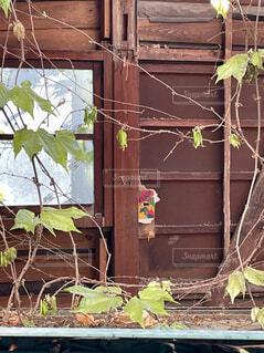 建物,屋外,家,観葉植物,草木