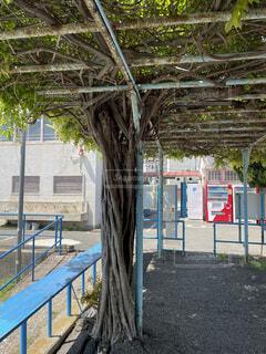 屋外,樹木,フェンス,地面,遊び場