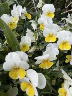 花,黄色,草木,フローラ