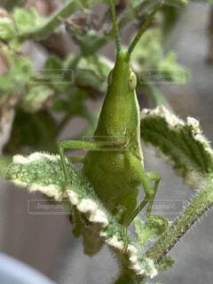 動物,昆虫,草木