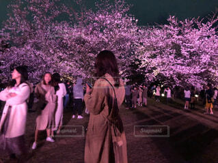 女性,風景,花,春,桜,夜,屋外,後ろ姿,夜桜,人物,ライトアップ,人