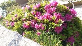 花,生命,草木,ガーデン,陽のあたる場所