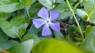花,緑,一輪,葉,凛と,お淑やか