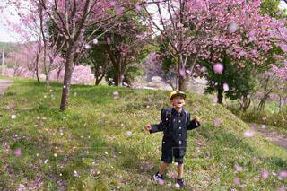 桜の花びらが舞う中での写真・画像素材[4346342]