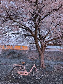 自転車,屋外,樹木,車両,ホイール,陸上車両,自転車のホイール