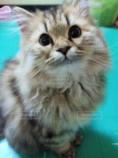 猫,動物,屋内,緑,かわいい,子猫,目,ネコ科