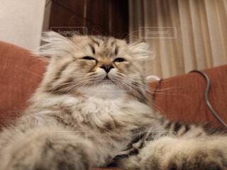 猫,動物,屋内,景色,子猫,ネコ科