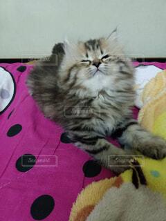 猫,動物,屋内,ぬいぐるみ,子猫,風