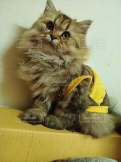 猫,動物,屋内,かわいい,黄色,子猫,座る,ネコ科