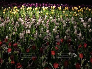 花,草木,ガーデン,ブルーム,フローラ