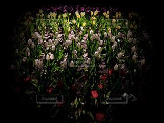 花,群衆,屋内,チューリップ,ハウステンボス,草木,ガーデン,ブルーム,フラワーフェスティバル,フローラ