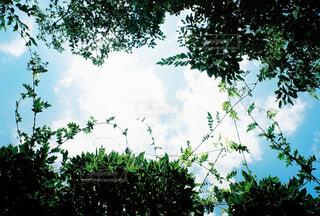自然,空,夏,木,屋外,緑,雲,青空,青,葉,レトロ,樹木,フィルム,みどり,草木