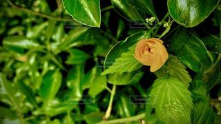 花,緑,黄色,草木,フローラ