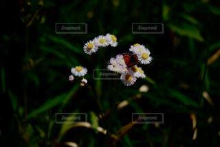 花,動物,昆虫,蝶,草木