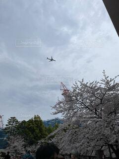桜と飛行機の写真・画像素材[4372273]