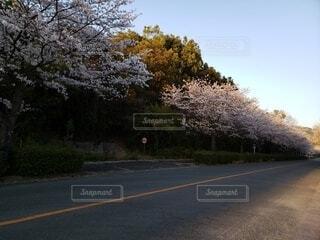 空,花,屋外,道路,樹木,道,草木