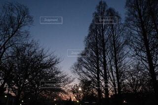 自然,空,夜,屋外,夕暮れ,夕方,景色,光,樹木,夕陽,草木