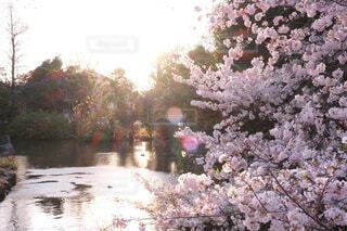 自然,花,屋外,樹木