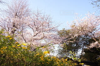 自然,空,花,屋外,樹木,草木
