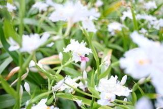 花,屋外,草,草木,フローラ