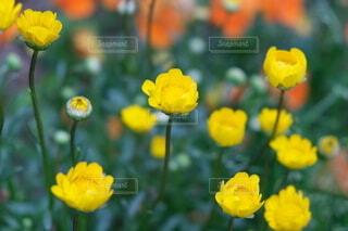 花,春,黄色,ガラス,カラー,草木,フローラ