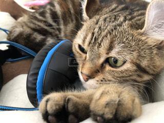 猫,動物,屋内,かわいい,子猫,ヘッドホン,ネコ科