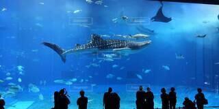 魚,水族館,葉,泳ぐ,水中,ジンベイザメ,海獣