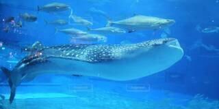 動物,イルカ,青,水族館,水面,葉,泳ぐ,サメ,海獣,フィン,スイミング プール
