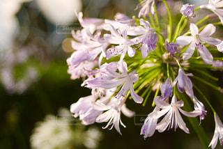 花,綺麗,TOKYO,夕方,光,樹木,六本木,japan,草木,リコリス,夏日