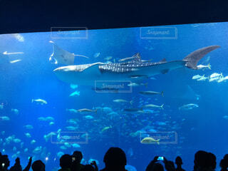 海,動物,魚,水族館,泳ぐ,水中,サメ,水槽,海獣,ジンベエザメ,フィン