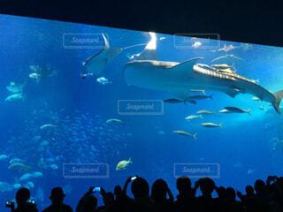 海,動物,魚,イルカ,水族館,泳ぐ,水中,サメ,水槽,海獣,ジンベエザメ,フィン,海洋生物学