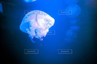 自然,海,動物,魚,水族館,暗い,水面,水中,クラゲ,デート,生きもの,海洋無脊椎動物