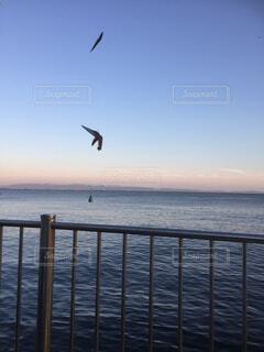 風景,海,空,夕日,魚,湖,青空,青,景色,釣り,夕陽